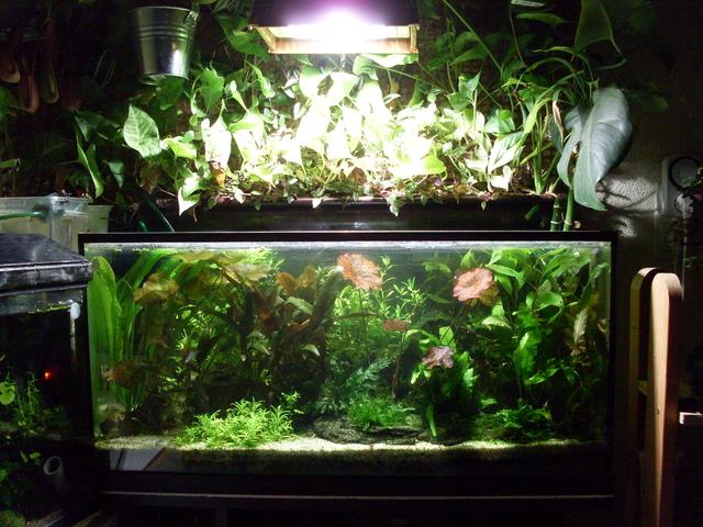 Aquarium hollandais for Aquarium ouvert